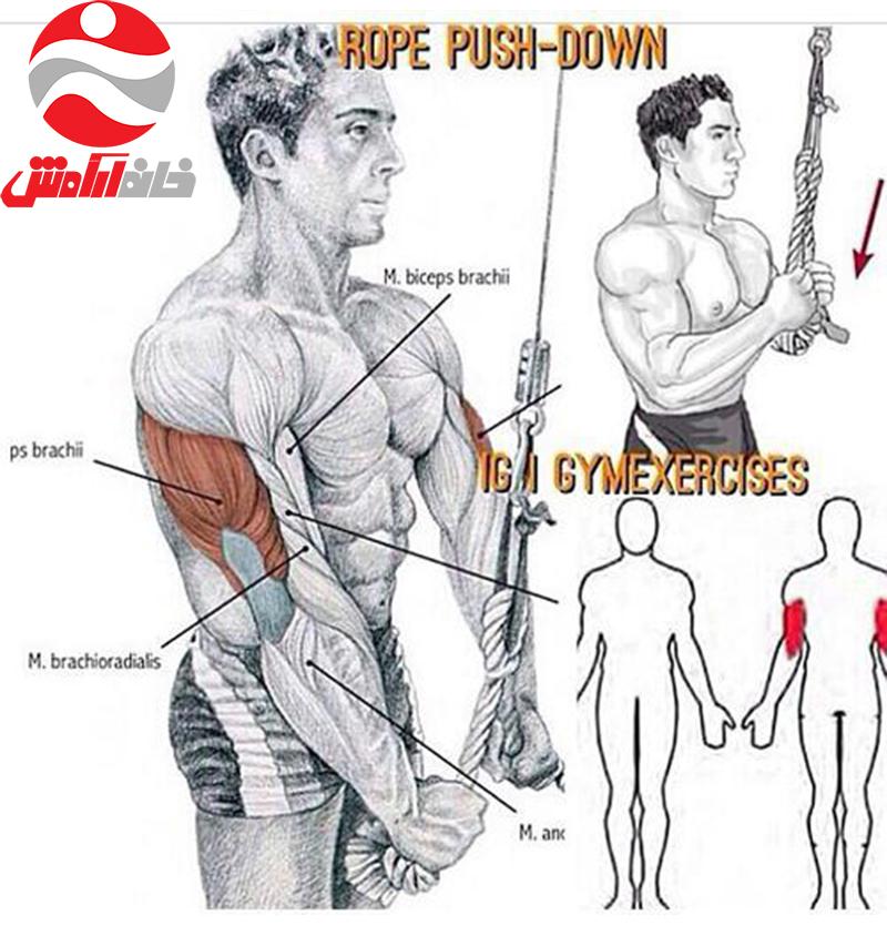 طناب پشت بازو